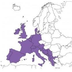 Abbonamento IFR digitale Europa Centrale per MFD (CEN)