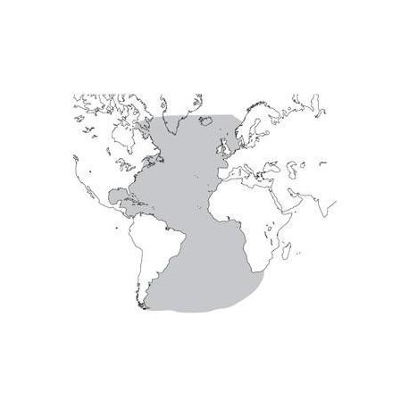 Abbonamento IFR digitale Oceano Atlantico per MFD (ATLSM)